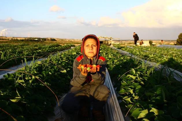 Gaza – Fragole, sangue e diserbante