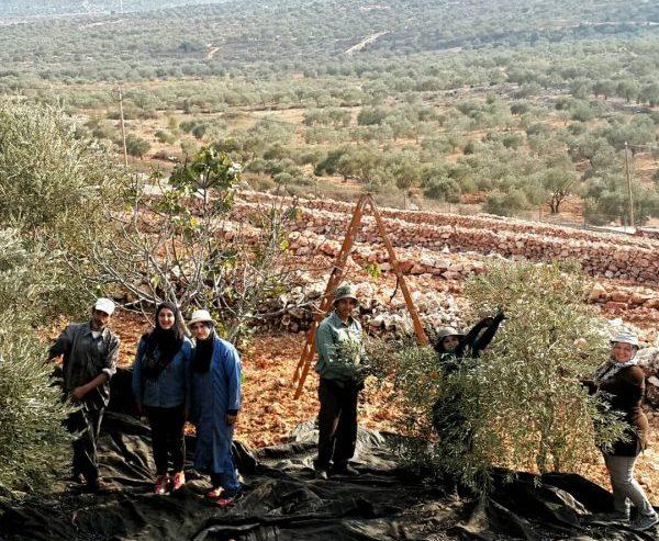 L'agricoltore palestinese: produttore e difensore del territorio