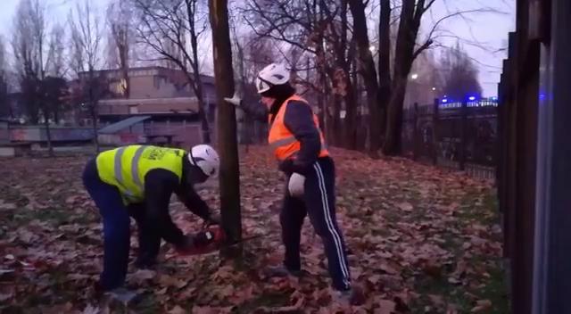 Parco Bassini: Polizia e taglio degli alberi. La falsa favola della Milano green